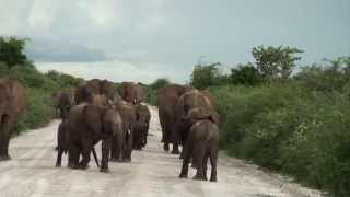 Safari Day in Etosha around Namutoni - Namibia