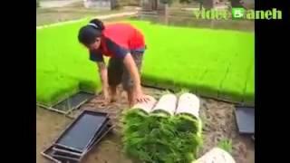 Inspirasi Buat Para Petani