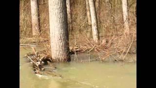Petrinja flooding february 2014