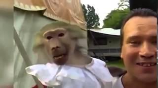 Смешное видео про животных нелепые моменты из их жизни