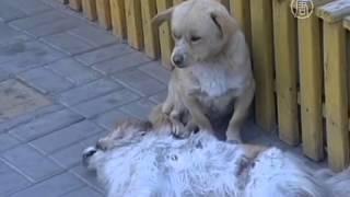 Собака не покидала погибшего друга всю ночь (новости)