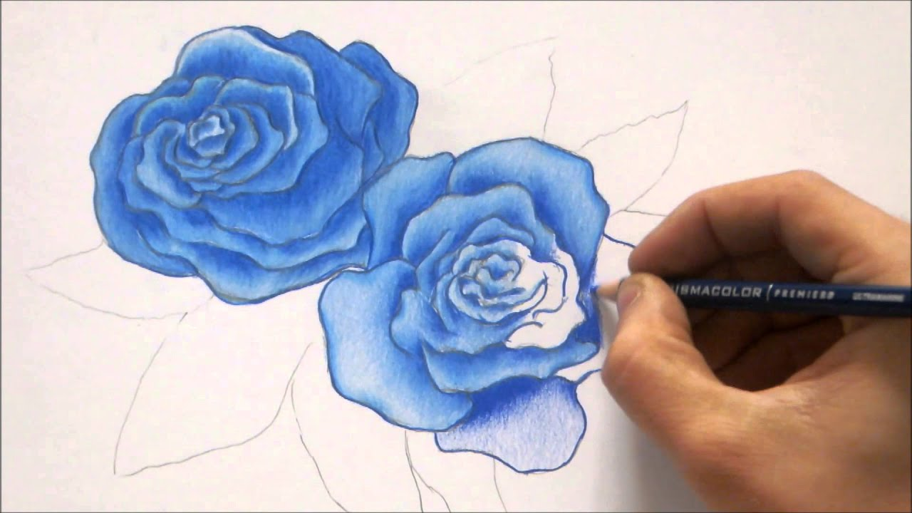 How To Draw Blue Rose | Roses Color Pencil Drawing - YouTube