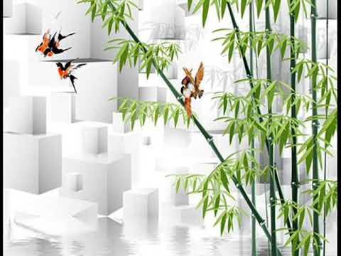 Bamboo Wallpaper Home Depot B Q Border
