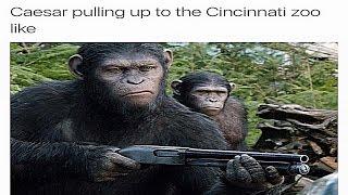 Harambe The Gorilla Dank Meme Compilation