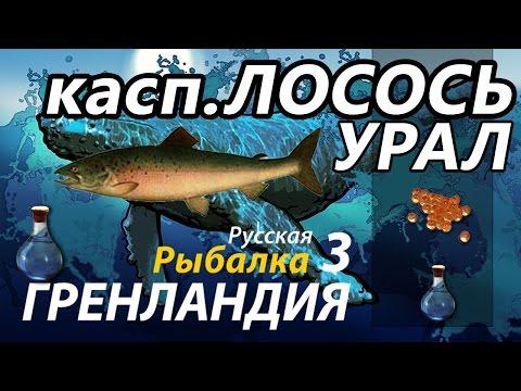лосось каспийский-русская рыбалка 3.6