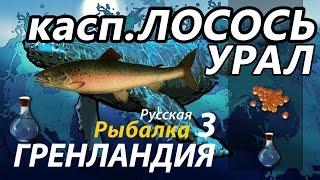 Лосось каспийский Урал / РР3 [Русская Рыбалка 3 Гренландия]