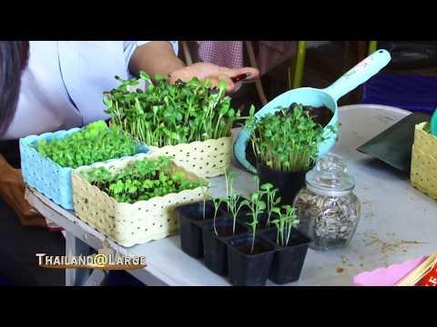 Thailand@Large Episode  Veggie Prince City Farm Learning Center