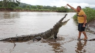 Preposterous Pets: Hand Feeding Deadly Crocs