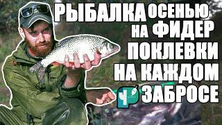 Рыбалка на Фидер осенью Клюет на каждом забросе