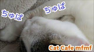 ミルクが恋しいのか 自分のお手手をちゅぱちゅぱする 保護猫ちゃん 可愛...