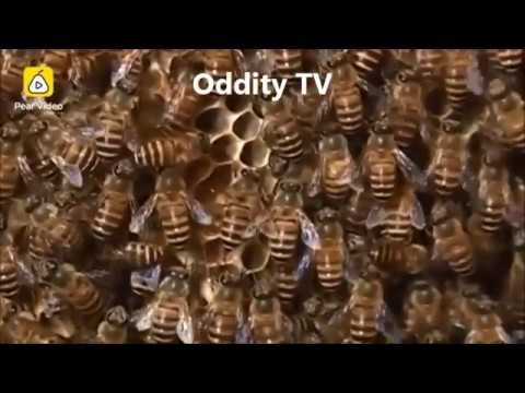 Family In China Keep Beehive In Living Room For 12 Years