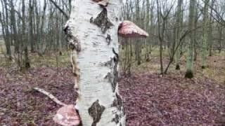 Bomen Egmond Binnen (fotocompilatie)
