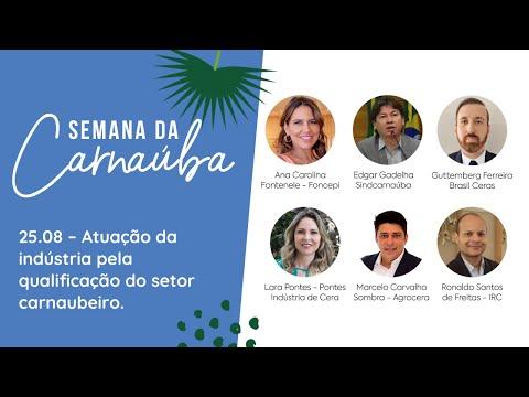 RESUMO 25.08   Semana da Carnaúba - Atuação da indústria pela qualificação do setor carnaubeiro.