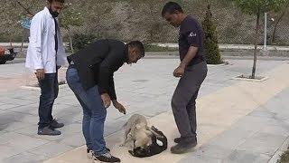 Acil servis önünde yavru köpeklerin kavgası