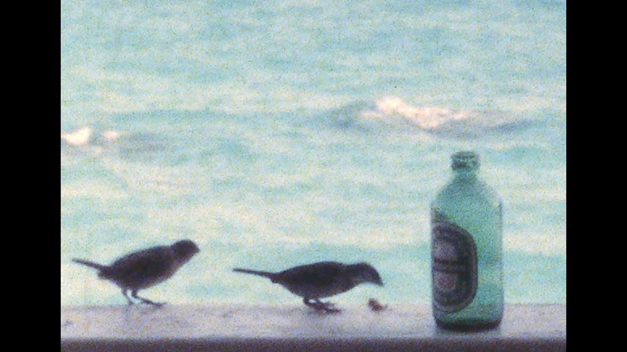 Bermuda Vacation 1980s Mopeds The Reefs Amp Sonesta Beach