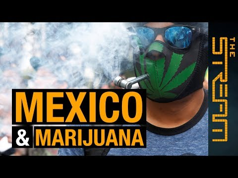 Can legal marijuana stop Mexico's drug cartels?   The Stream