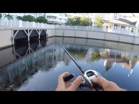 Pond Bass Fishing at Disney World
