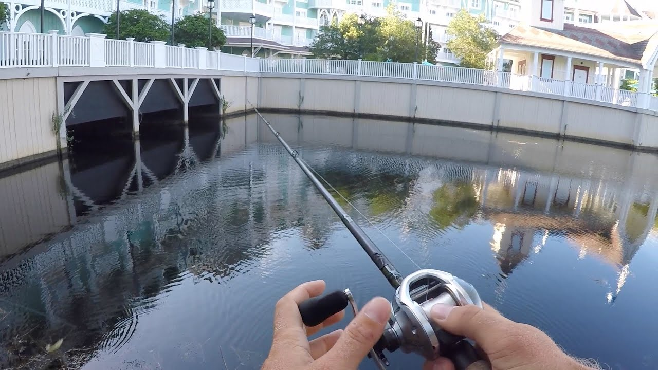 Pond bass fishing at disney world youtube for Fishing at disney world