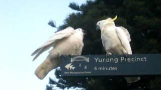 занудный попугай(, 2011-06-21T02:34:19.000Z)
