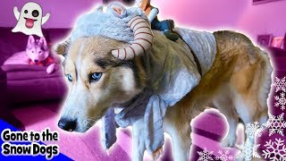 Funny Dogs in Halloween 2017 Costumes