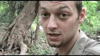 Jungle Survival Folge 8: Eine spannende Begegnung