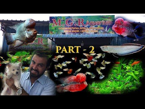 MGR Aquarium Kesari Nagar Adambakkam Part-2