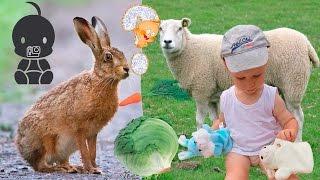 ПОЗНАВАТЕЛЬНАЯ ИГРА Что едят домашние животные. Познавательные игры для самых маленьких.