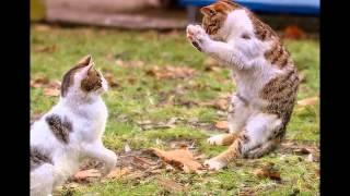 Кошачьи игры и игрушки