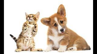 「絶対に笑う」あり得ないことをする犬★おもしろい犬のハプニング, 失敗画像集 #44
