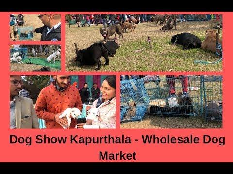 Dog Show Kapurthala - Wholesale Dog Market - Bhola Shola