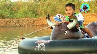 เด็กตกปลา บนแพกระทิง