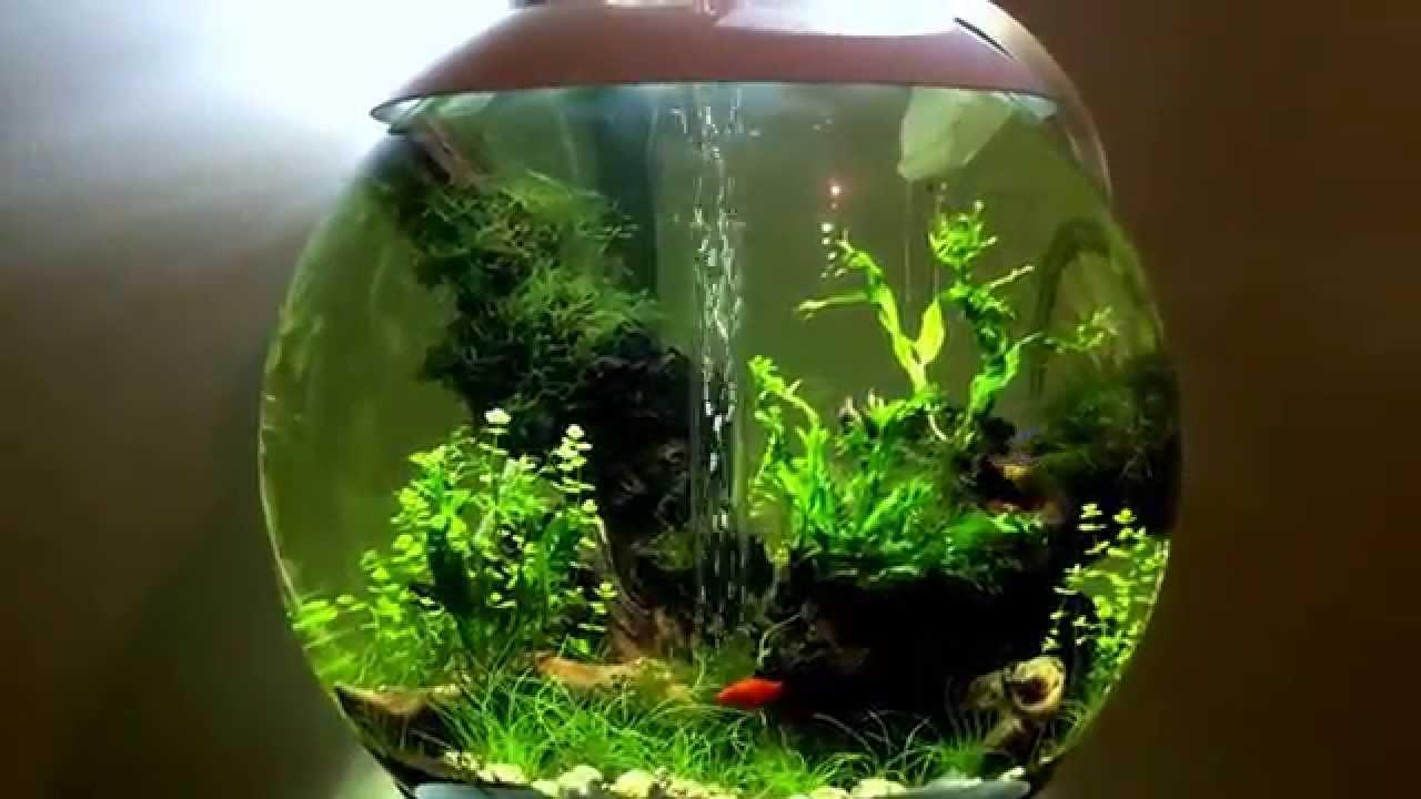 Biorb 60 freshwater planted aquarium p1 youtube Decoration aquarium 60 litres