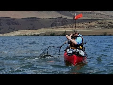 Spring chinook fishing the mouth of the deschutes river for Columbia river fish counts