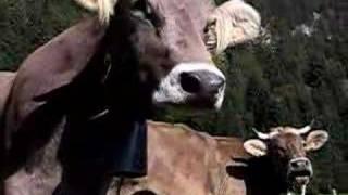 la vache suisse