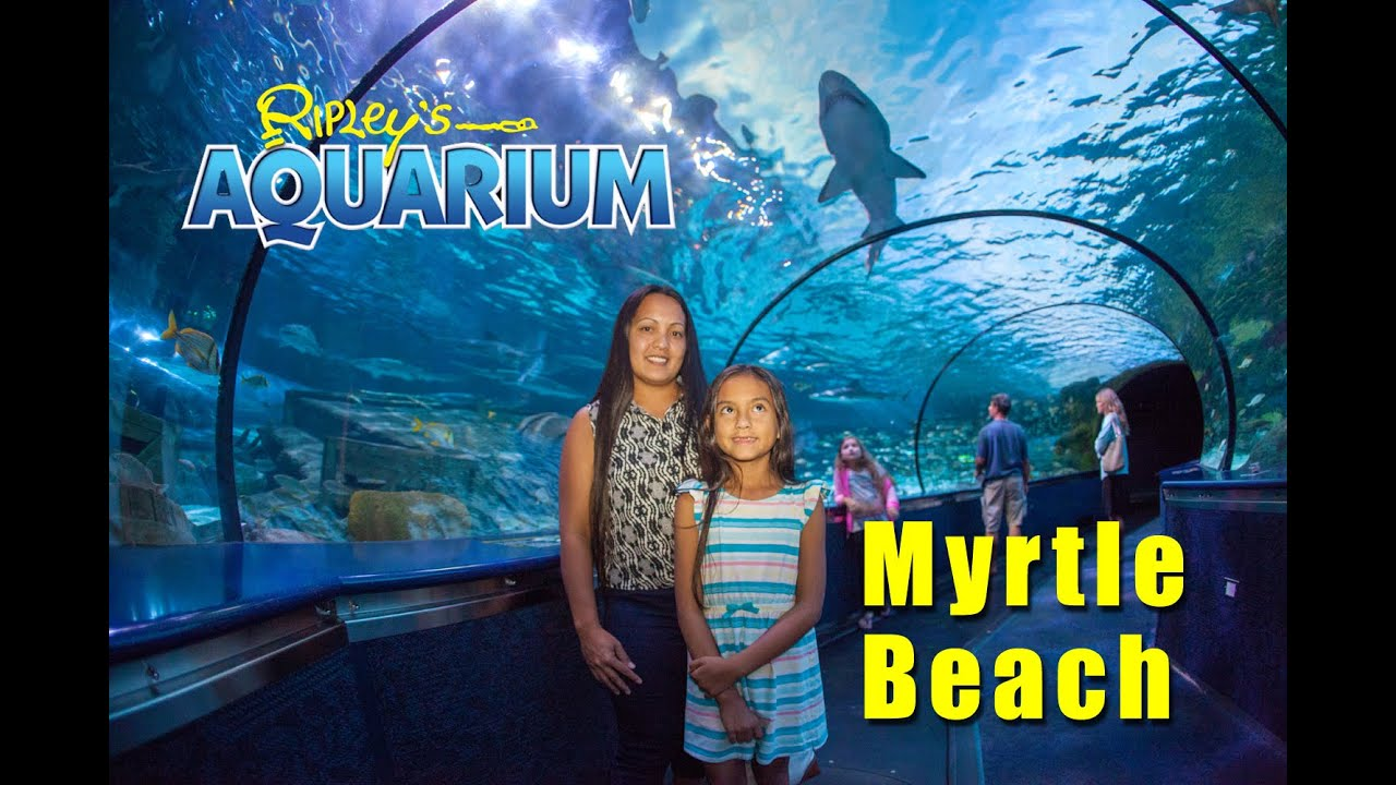 Image Result For Ripleys Aquarium Of Myrtle Beach Myrtle Beach Sc