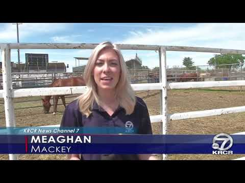 Red Bluff Rodeo Caught Shocking Horses, Kills One Horse