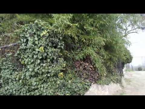 Вопрос: Какие вечнозеленые растения растут в России?