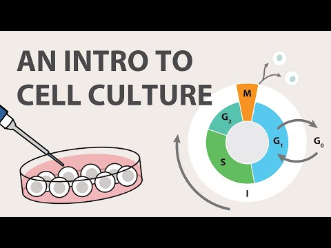 1) Cell Culture Tutorial - An Introduction