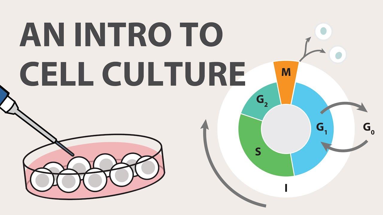Cell Culture - Introduction | ABM Inc