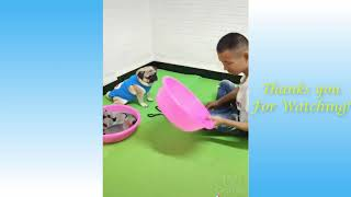 Cute Pets And Funny Animals Compilation  Pets Garden, kidzzzz viral , top ten 10