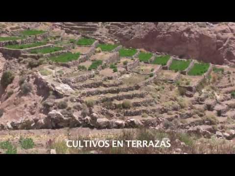 Lickanantay Cultivos En Las Terrazas De Caspana Youtube