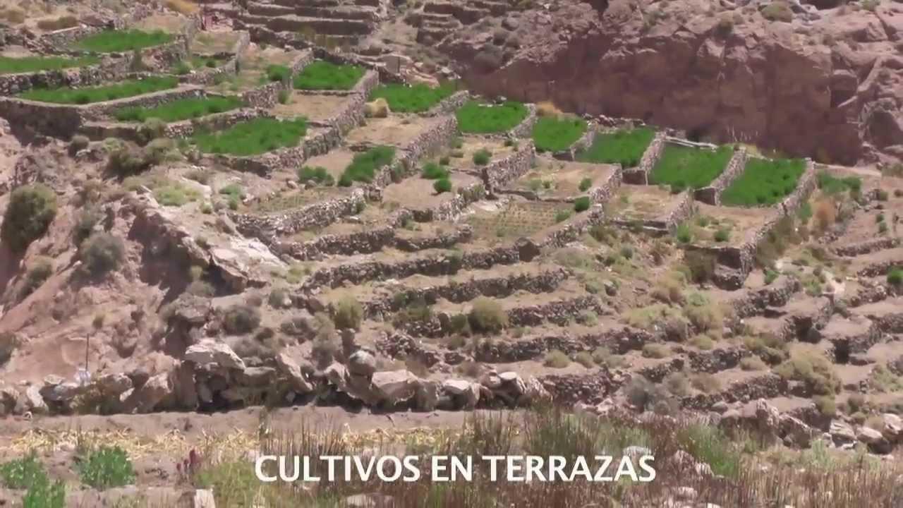 Lickanantay Cultivos En Las Terrazas De Caspana