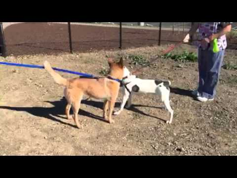 Kahuna's Dog Meeting