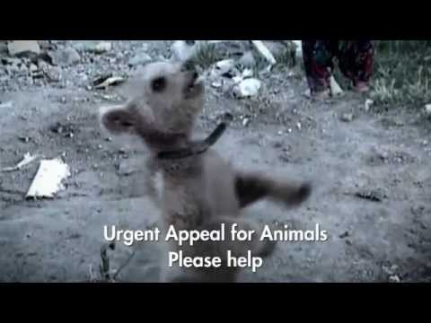Latest TV advert from World Animal Protection