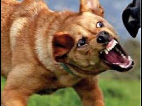 تفسير رؤية عضة الكلب فى المنام Youtube