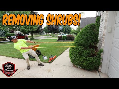 Shrub Removal ► Small Tear Out ► Removing 2 Shrubs With Brandon's Help!