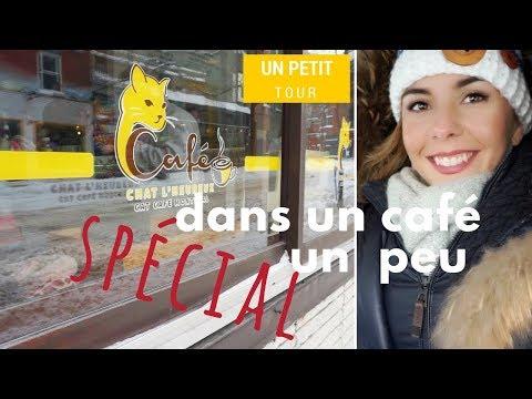 Tu Rêves D'adopter Un CHAT à MONTRÉAL? 😻 Découvre Le Café Le Chat L'heureux   VLOG