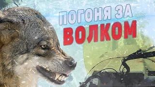 Охота на волка на буране. Защита стад оленей