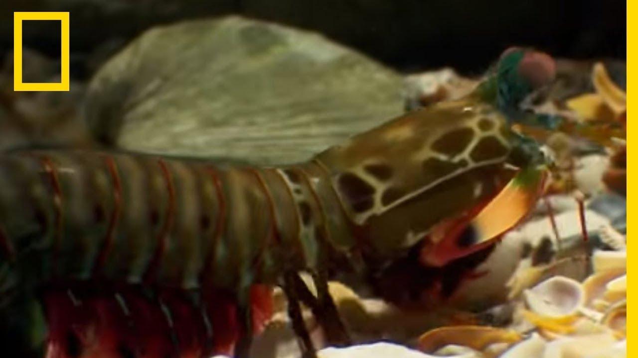 Les crevettes sont des maniaques de la propreté