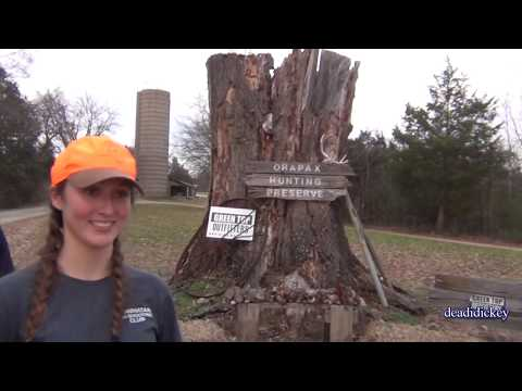 Quail Hunt with Brittany Spaniels